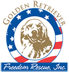 Golden Retriever Freedom Rescue