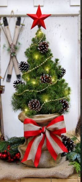 """The North Star tree is a 22"""" Dwarf Alberta Spruce"""